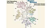 Molekularni konzilijum – put za precizniju primenu precizne onkologije