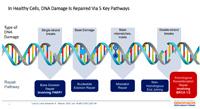 Sveobuhvatno genomsko profilisanje (CGP) u karcinomu dojke i karcinomu ovarijuma